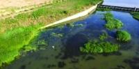 鞍山:万水河畔 10余只苍鹭戏水(图) - 辽宁频道
