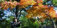 免费为游客拍照10年送七千照片 - Syd.Com.Cn