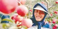 今年法库寒富苹果产量1.5万余吨 - Syd.Com.Cn