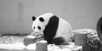 沈阳随处可戏雪 史上最大规模冰雪节来袭 - 辽宁频道