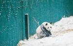 沈阳:戏雪(图) - 辽宁频道