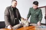 大连:警民联手救助保护动物雕鸮(图) - 辽宁频道