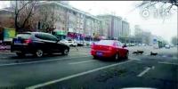 大连:流浪狗组团过马路 多位司机停车让行 - 辽宁频道