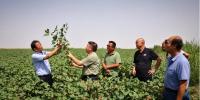 专家指导区域协同 推进棉花生产全程机械化 - 农业机械化信息网