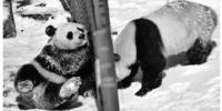 雪后降温 来看看动物园里的动物如何过冬? - 辽宁频道
